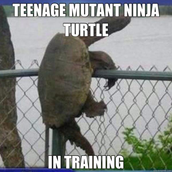 Family Friendly TMNT memes - funny Teenage Mutant Ninja Turtle memes