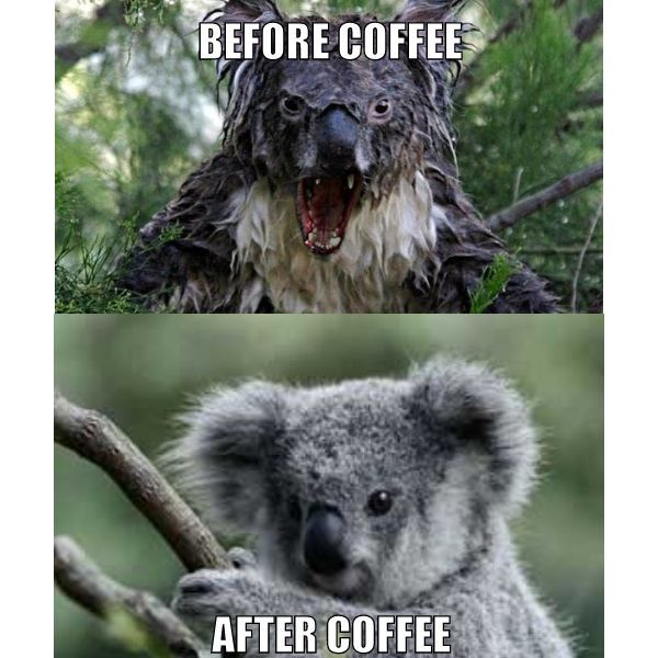 koala-before-coffee-after-coffee