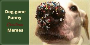 Dog-gone Funny Christmas Memes, dog puns. Christmas puns,