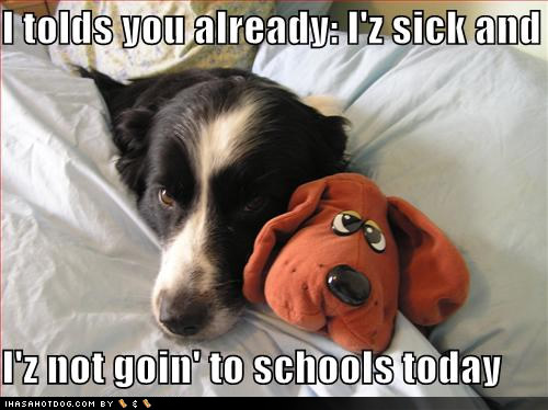 funny dog pictures goin school?resize=500%2C374 memes to make you smile when you are sick as a dog (friday