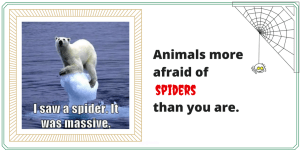 Funny Animals More Afraid of Spiders than You Are (funny spider memes)