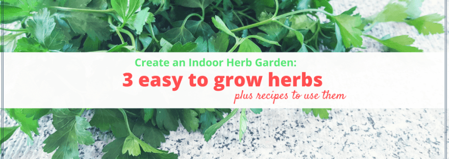 Create an Indoor Herb Garden: 3 easy to grow herbs and recipes to use them. #gardening #recipes #herbs