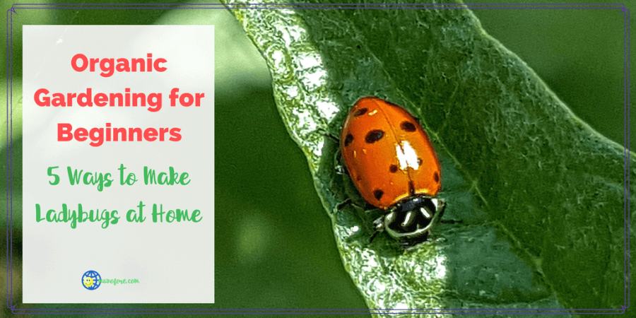 """lady bug crawling on a leaf with text overlay """"Ways to Make Ladybugs at Home"""""""