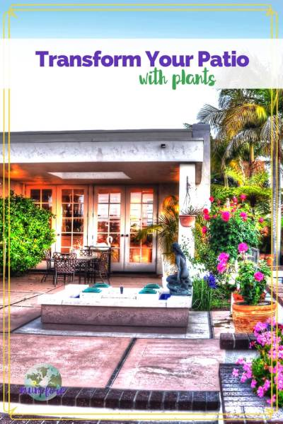 "Photo of patio with text overlay ""Transform Your Patio with Plants"