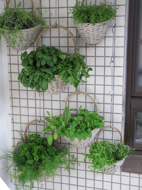 herbs in hanging baskets