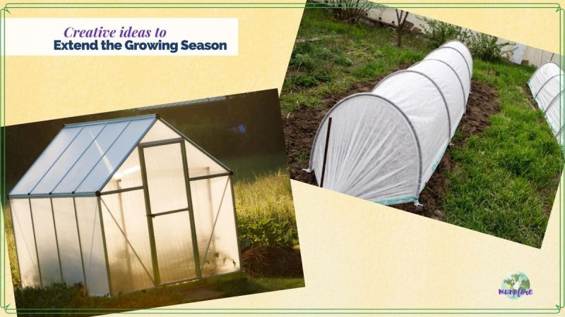 "collage of greenhouse and cold frames and text overlays ""cretive ideas to extend the growing season"""