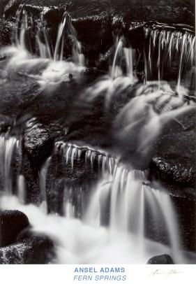 Ansel Adams. Fern Springs
