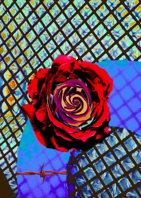 Jeff Hill - Lonely Rose