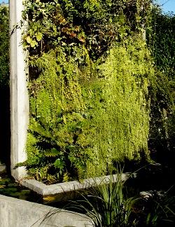 Faire Un Mur Végétal Extérieur : faire, végétal, extérieur, Créer, Végétal, L'extérieur