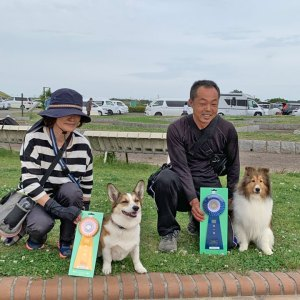 JKC四国ブロックアジリティー競技会2019年5月17日