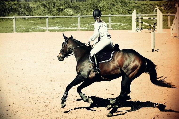 horse-806397_1280.jpg