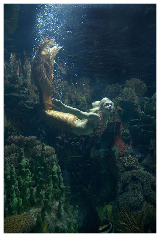 Sirenas De Mar Sirenas De Mar Simple Ho Sirenas Del Mar