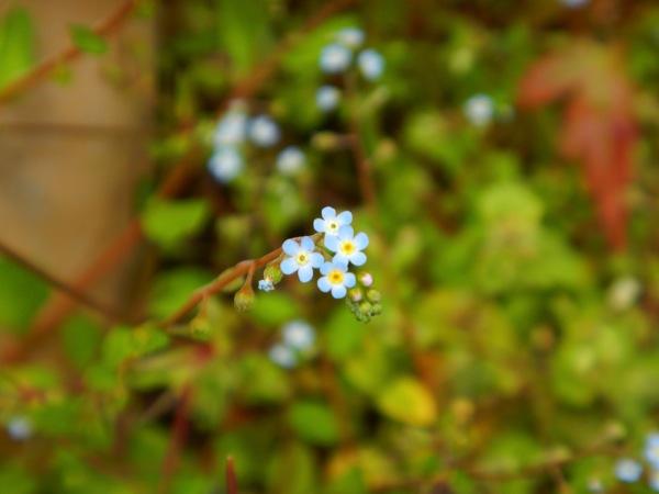 道端に咲く花々。 #フォト4.14