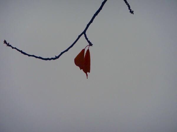 雨の中の紅葉たち。