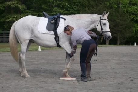 Placing hoof on sure foot pad
