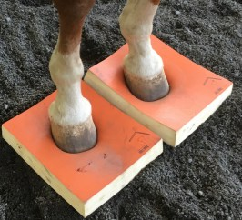 Impression Pad two hooves