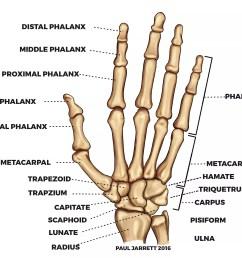 hand bones diagram blog wiring diagram labeled diagram of hand bones hand bones diagram wiring diagram [ 3577 x 2795 Pixel ]