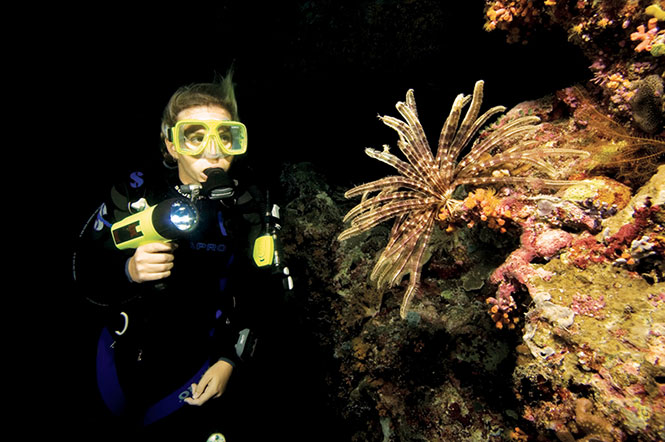 Night-Diving-in-North-Sulawesi