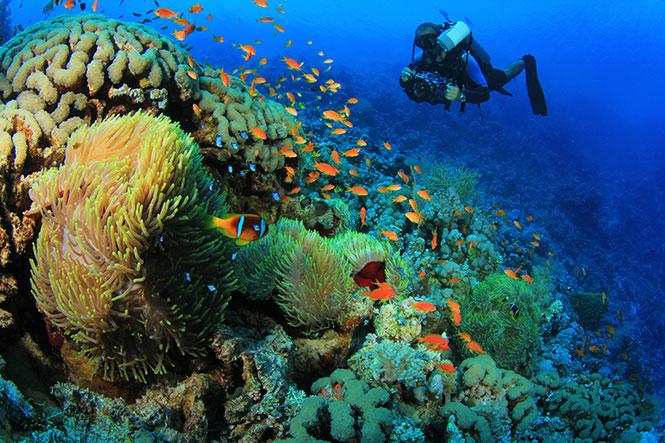 PADI-Advanced-Open-Water-Indonesia
