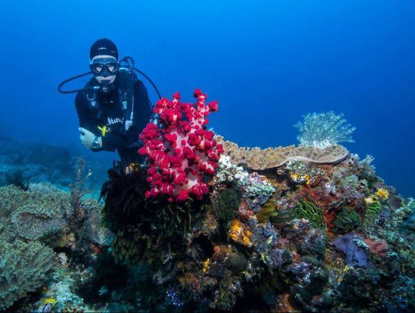 Soft Coral Bangka
