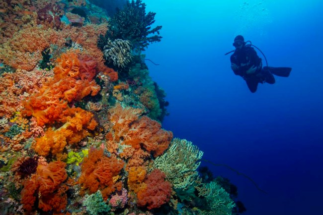 Diving a wall in North Sulawesi