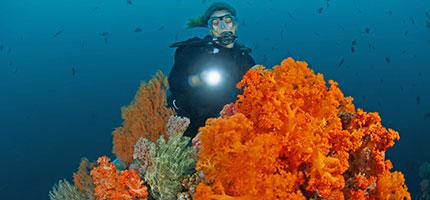 Diving-Bangka-Island