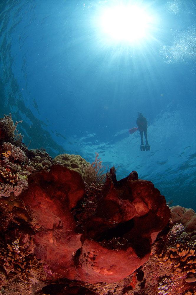 Snorkeling-Tanjung-Usi-Bangka-Island-Indonesia