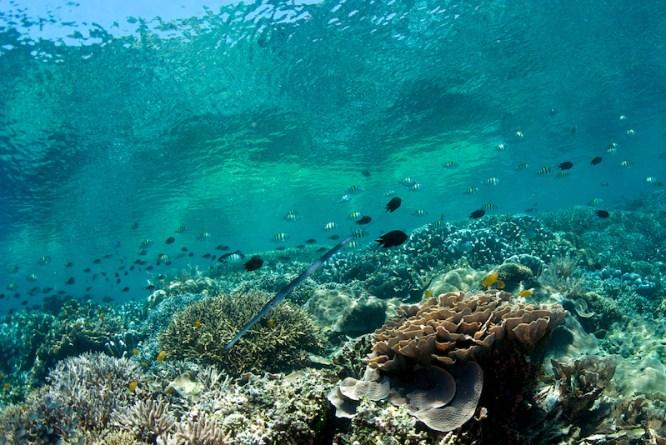 Bunaken-Timur-Sulawesi