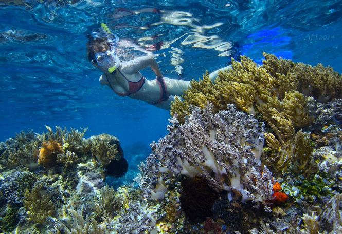 Snorkling North Sulawesi