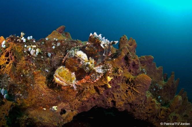 Snorkeling Murex Manado house reef