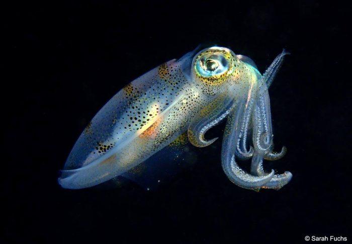 Dive Manado Bay