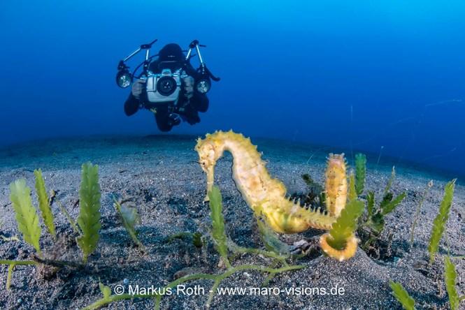 Manado Bay Muck Diving