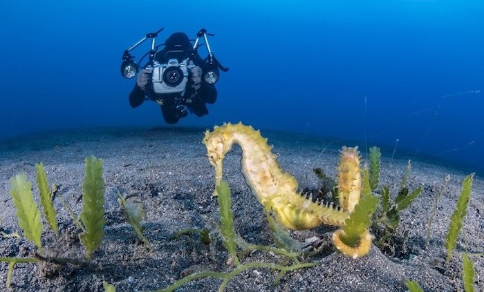 Diving Sulawesi