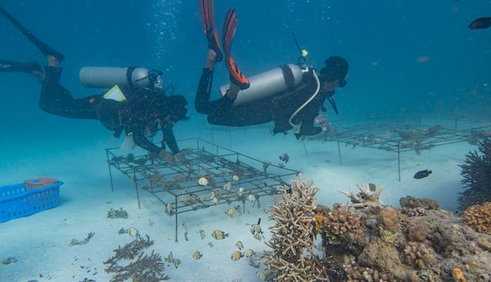BANGKA OCEAN GARDENING
