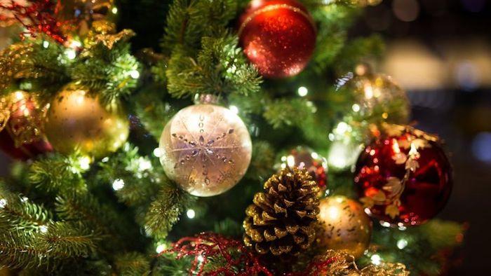 Christmas tree Sulawesi