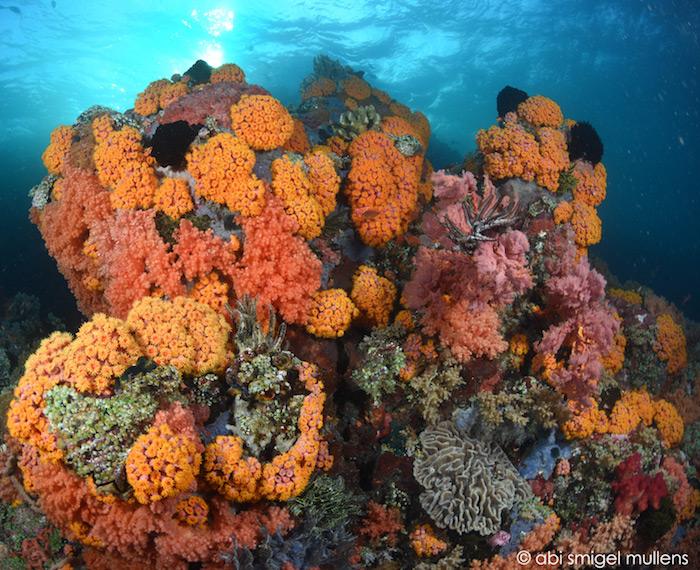Diving Bangka Sulawesi