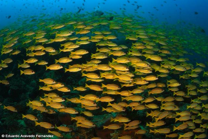 Diving Bangka