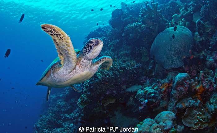 Diving Bunaken Marine Park