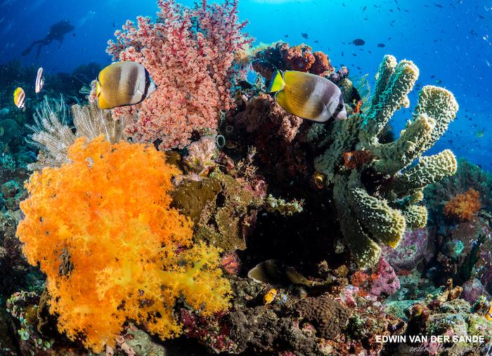 Bunaken Dive Resort