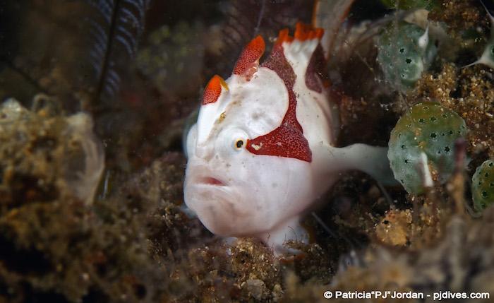 Muck Diving Manado