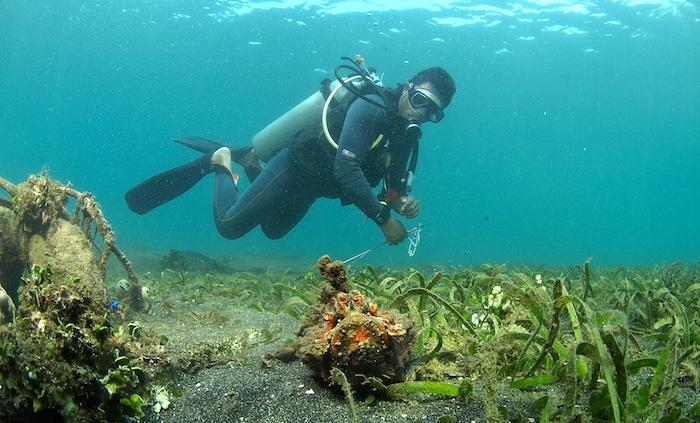 Sea grass Manado