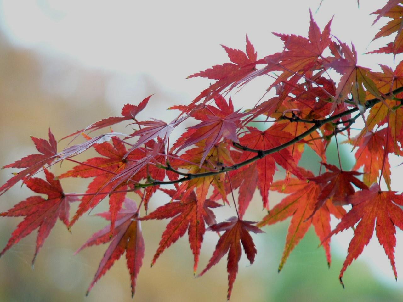 Pohon tanpa daun  Berguru
