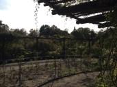 verblühter Rosengarten