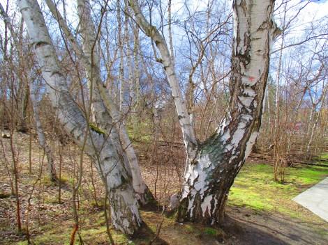 und noch mehr schöne Bäume
