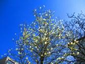 Blütenweiß vor himmelblau