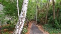 Verwunschene Wege in ehemaligen Gleisen