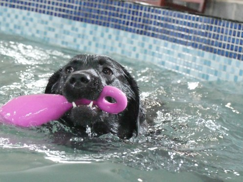 Free swim available