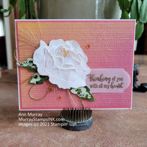 pink-tinged peony on a scripty embossed colorful background