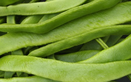Last of runner beans