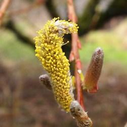 Plenty of pollen
